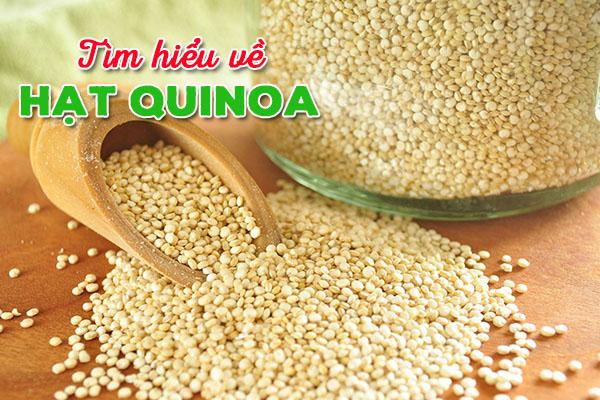 Hạt quinoa là gì