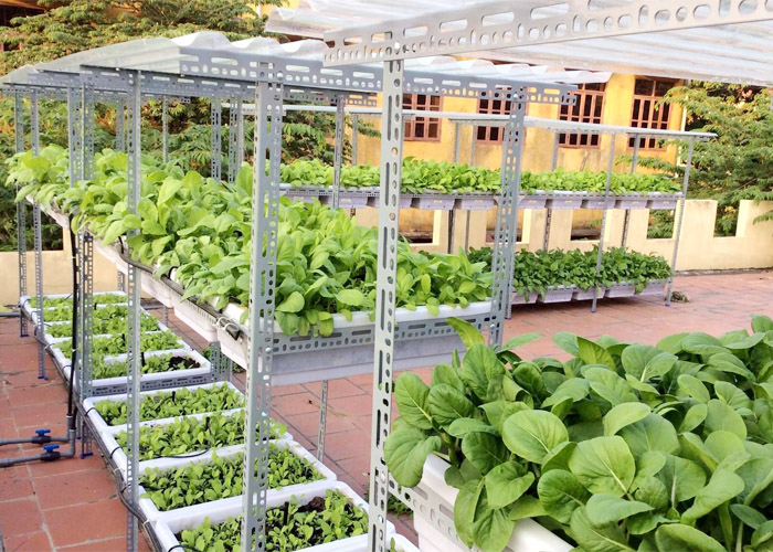 hướng dẫn trồng rau sạch tại nhà