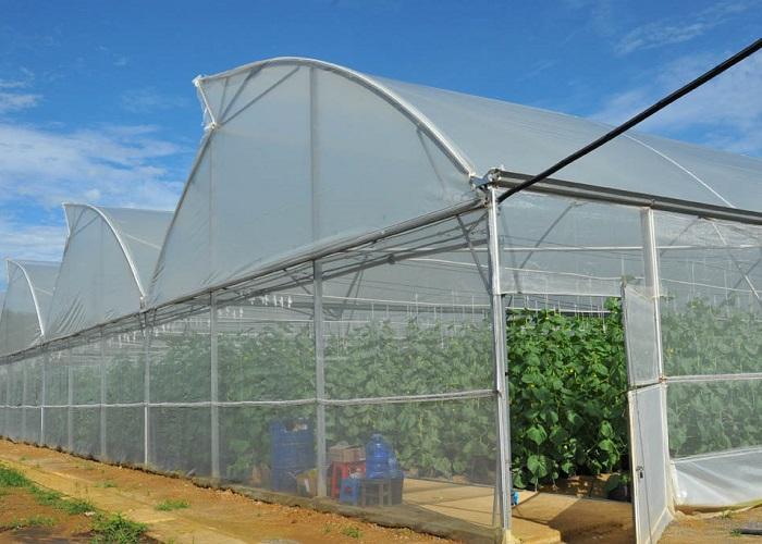trồng rau sạch bằng nhà lưới